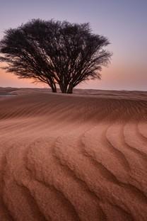 一棵树背景图片高清壁纸3