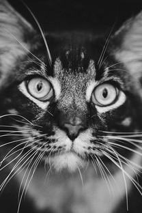这些猫咪的黑白照片非常有意境2