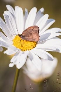 精选蝴蝶图片摄影壁纸