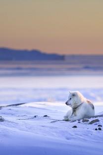 动物与自然和谐的图片壁纸