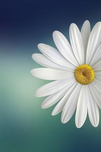 小清新素雅简洁植物背景图片壁纸