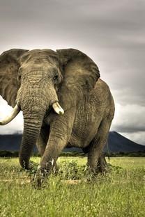 大自然野生动物高清图片壁纸