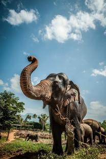 大象图片手机壁纸