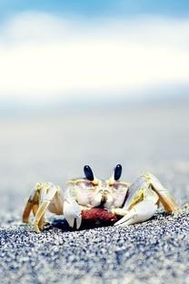 海滩上的螃蟹壁纸