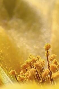 黄色的花朵最先开背景图片壁纸