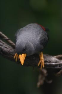 唯美可爱的小鸟图片壁纸