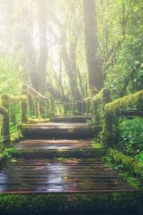 森林小径高清图片壁纸