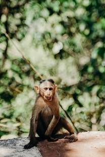可爱小猴子高清图片大全壁纸