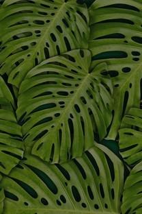 精选大自然满屏护眼植物高清图片壁纸
