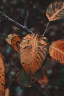 植物特色高清图片壁纸