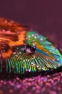 炫彩羽毛超无水印壁纸