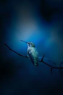 世界最美的鸟图片壁纸