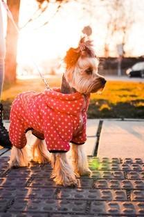 可爱小美女狗狗高清壁纸