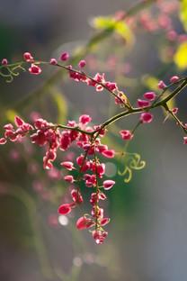春季植物写真虚焦壁纸
