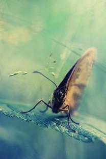 蝴蝶唯美写真手机壁纸