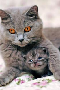 高清小猫手机壁纸图片