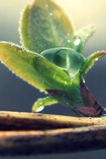 植物景色唯美手机壁纸