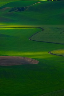 安卓绿色风景手机壁纸