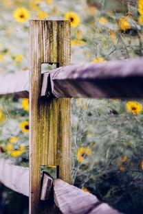 植物花卉手机壁纸下载