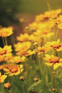 简约花卉手机壁纸图片