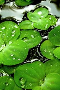 简约绿色自然壁纸