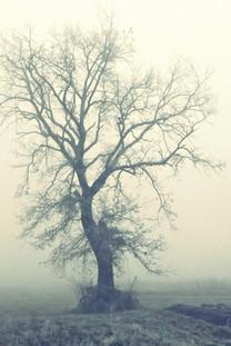 早晨的浓雾手机桌面壁纸