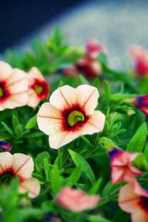 高清花卉唯美壁纸图片
