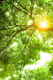 绿色护眼手机壁纸640X960
