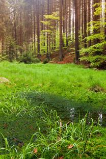植物草丛手机风景壁纸