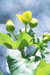 花卉自然手机壁纸