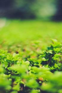 绿色护眼手机壁纸