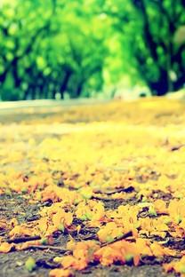 秋天的景色手机大图壁纸