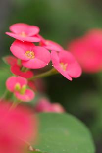 简约花卉安卓壁纸