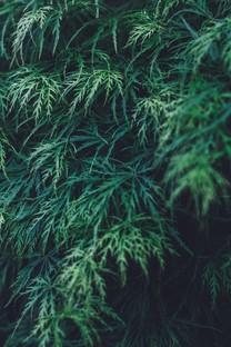 绿色护眼手机高清图片