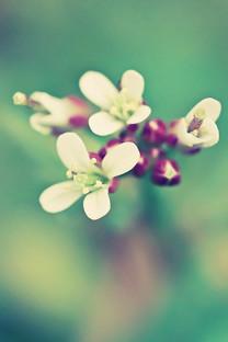 唯美花卉手机壁纸图片