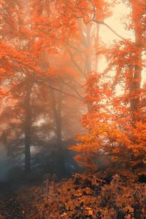 秋天的红叶小米手机高清壁纸