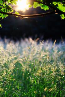 阳光下的景色绿色手机壁纸