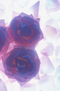 【花的姿态】安卓高清手机壁纸