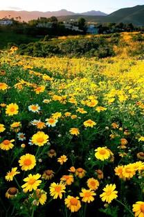 碎花唯美风景手机壁纸