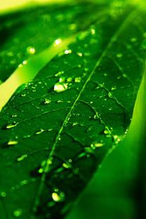 高清风景植物手机壁纸