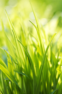植物微距摄影手机壁纸