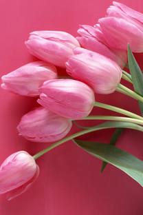 缤纷花卉写真手机壁纸