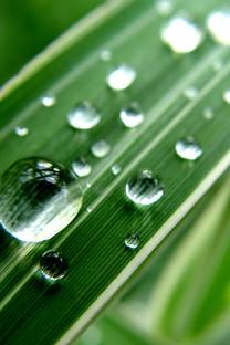 护眼绿色植物手机壁纸