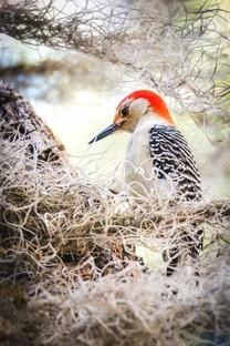 小鸟近距离摄影手机图片壁纸