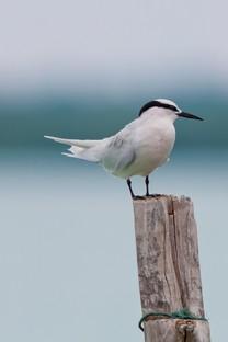 可爱的小鸟唯美摄影图片壁纸