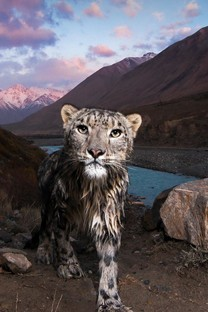 草原猛兽强大的豹子图片壁纸
