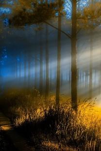 林中透过树叶洒下的阳光图片壁纸