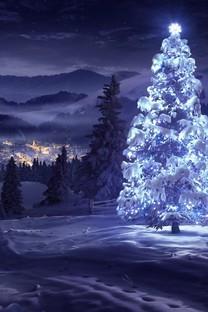 唯美的圣诞树图片壁纸