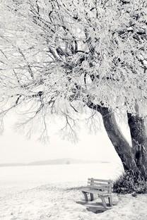 仙境般唯美雾凇风景图片壁纸