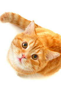 可爱小猫手机壁纸